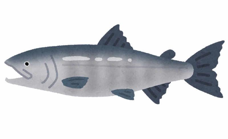 鮭 イラスト